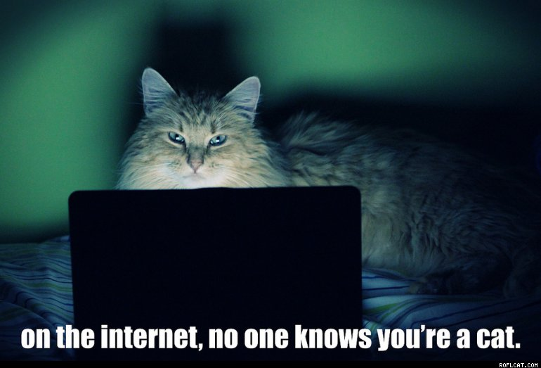image of a cat looking at a laptop with the txt On the Internet no one knows you're a cat