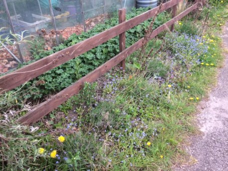 allotment showing weeds