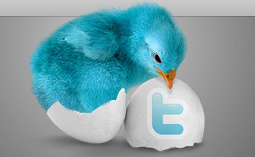 imag showing a blue bird in a twitter egg