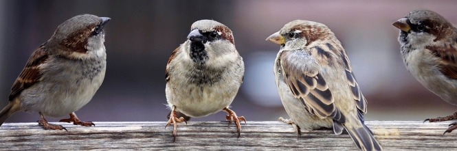 image showing a group of sparrows