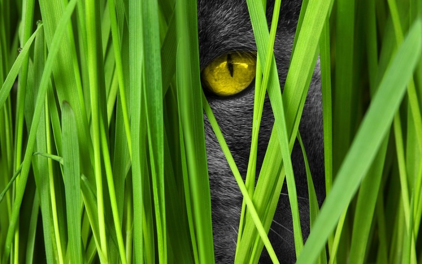 image showing a cats eye peering out from behind grasses